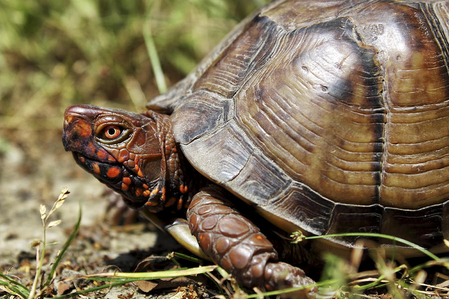 Believe Your Baby Turtle Finding Can Be Safe